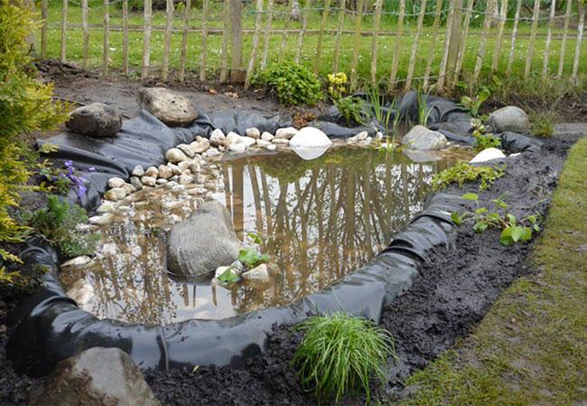 Backyard Frog Pond australian museum frogid project